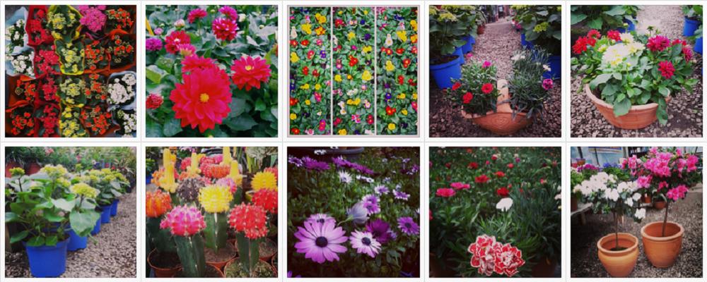 Marmara 'nın Bütün Çiçekleri